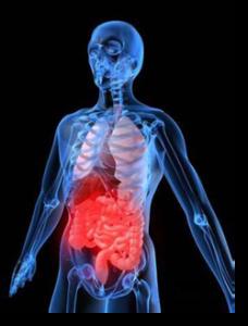 gastrointestina-tract