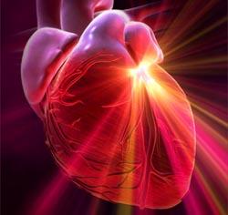 Ритм сердца