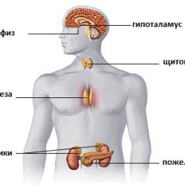 Лечение заболеваний эндокринной системы с помощью тренажера Фролова ТДИ-01