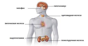 endocrinnaya