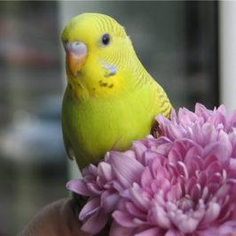 Аллергия на попугаев, симптомы и признаки