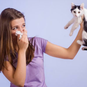 аллергия на шерсть препараты