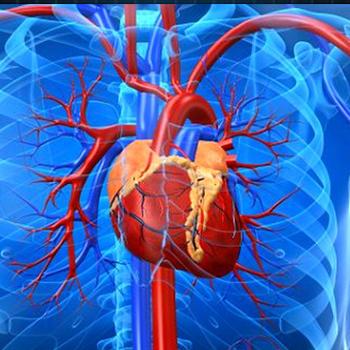 Аритмия сердца – народные средства лечения