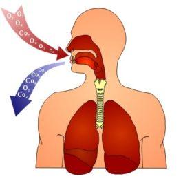 Этапы дыхания на тренажере Фролова