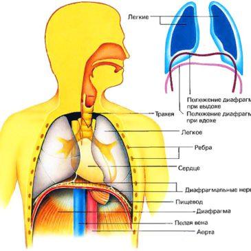 Диафрагмальное дыхание на ТДИ-01