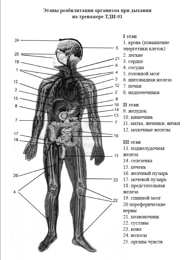 этапы реабилитации организма при дыхании на тренажере Фролова ТДИ-01