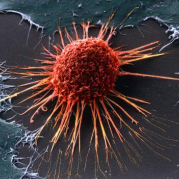 Как возникает рак?